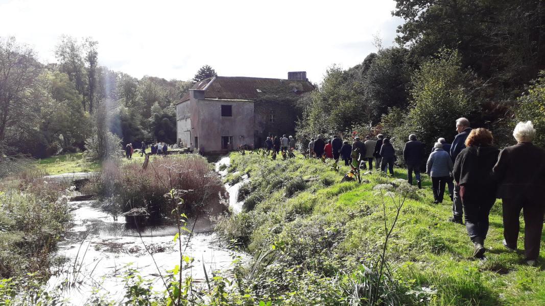 Goéland-Masqué-bretonnants-20-10-2019_006