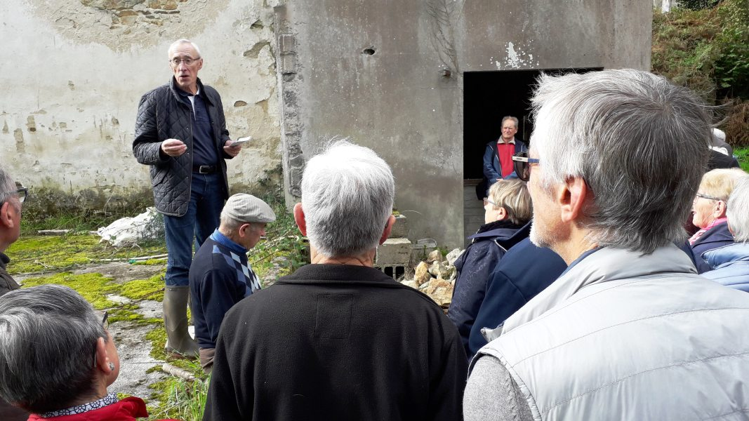 Goéland-Masqué-bretonnants-20-10-2019_009